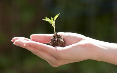 Stiftung und Stiftungsgründung — eine Übersicht